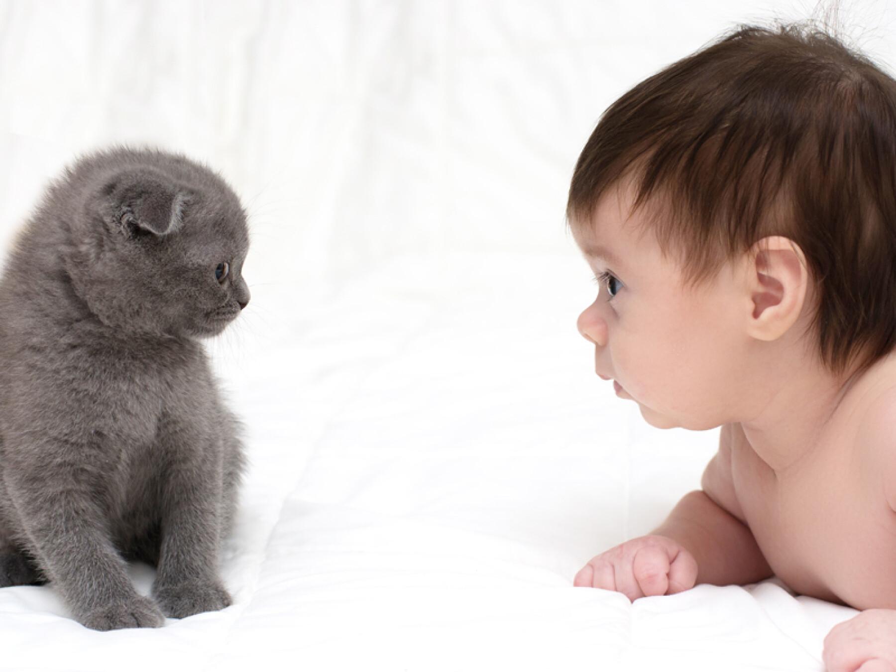 Bébé et son animal