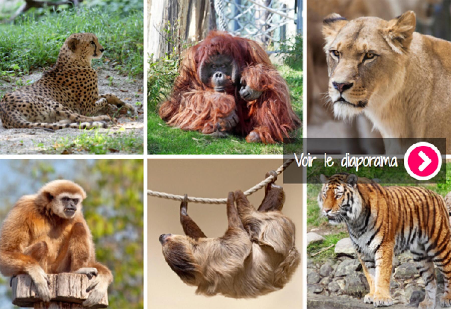 diapo zoos