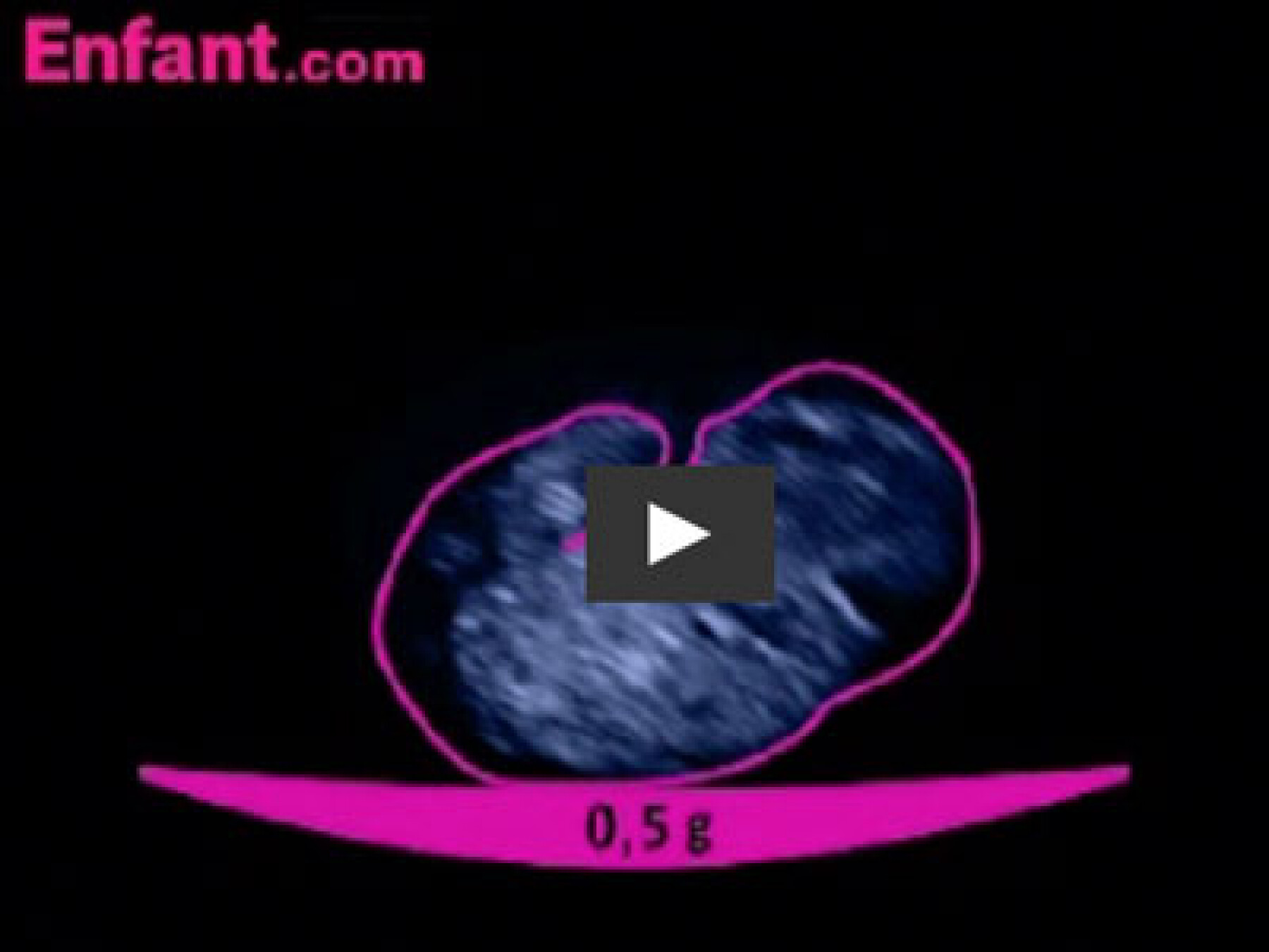 1er mois in utero